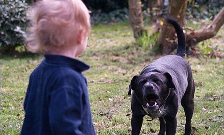 ребенка укусила собака что делать