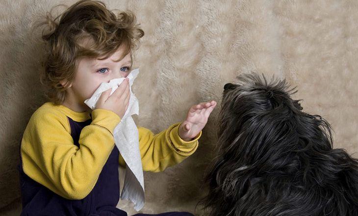 Как бороться с домашними аллергенами?